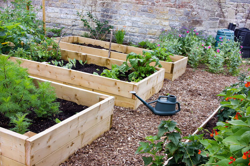 raised bed vegetable layout