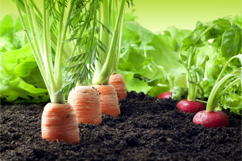 Growing Vegetables In South Florida Tips
