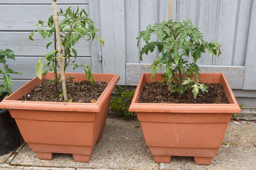 Cheap container vegetable gardening ideas. vegetable garden in a box