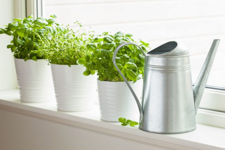 herb garden for kitchen