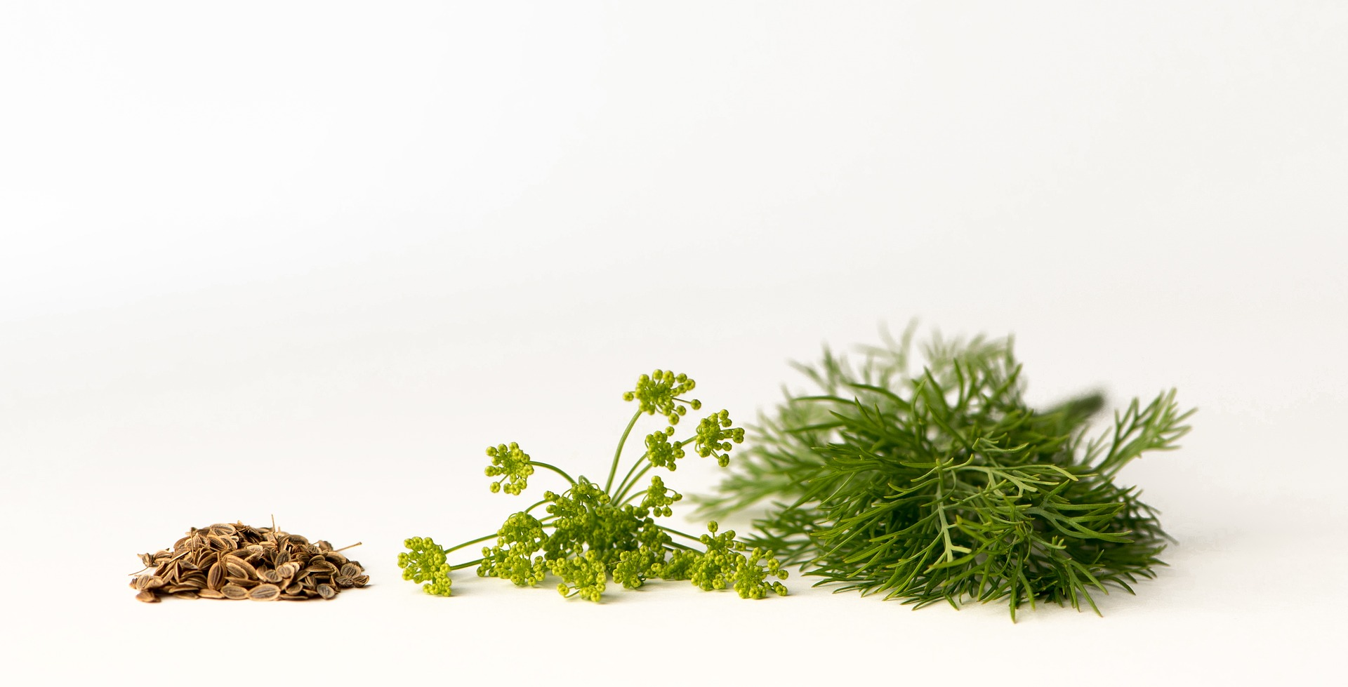 Tips For Growing Dill From Cuttings