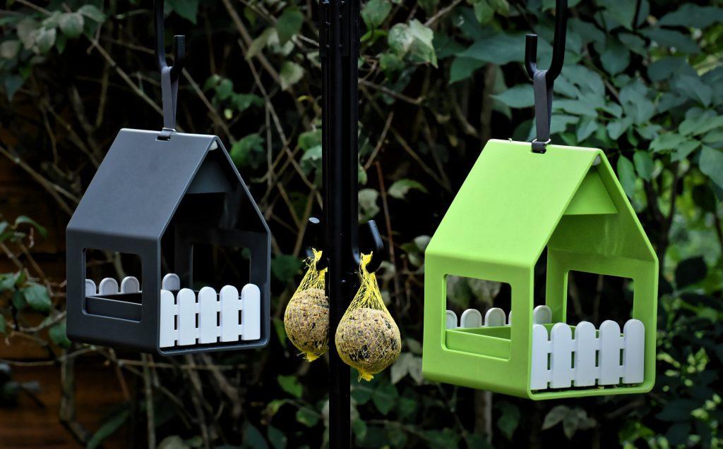 How to grow a birdseed garden