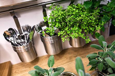 Easy Vegetable Garden Growing For Condo Or Apartment Living