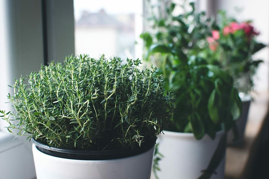 Useful Herbs In The Home - How To Grow Thyme In A Pot