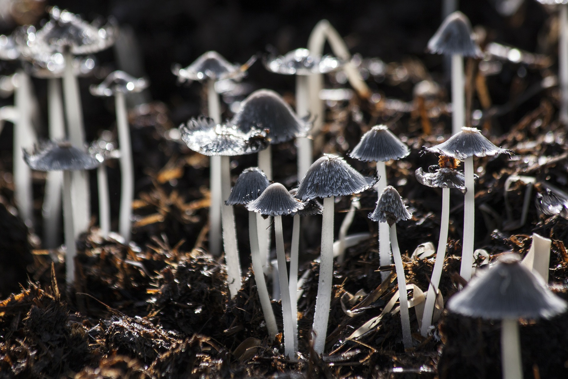 Got a Basement? Grow Mushrooms – It's Easy!